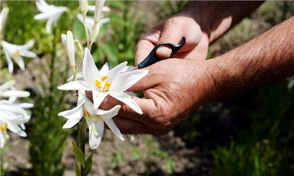 Tek Bitki 5 Pazara Birden Hitap Ediyor Tarlasera