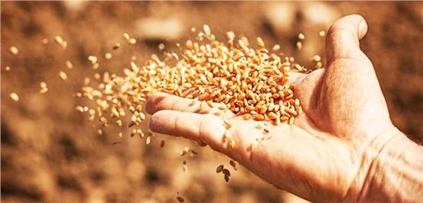 Tohumluk fiyatlarına yüzde 20 zam!