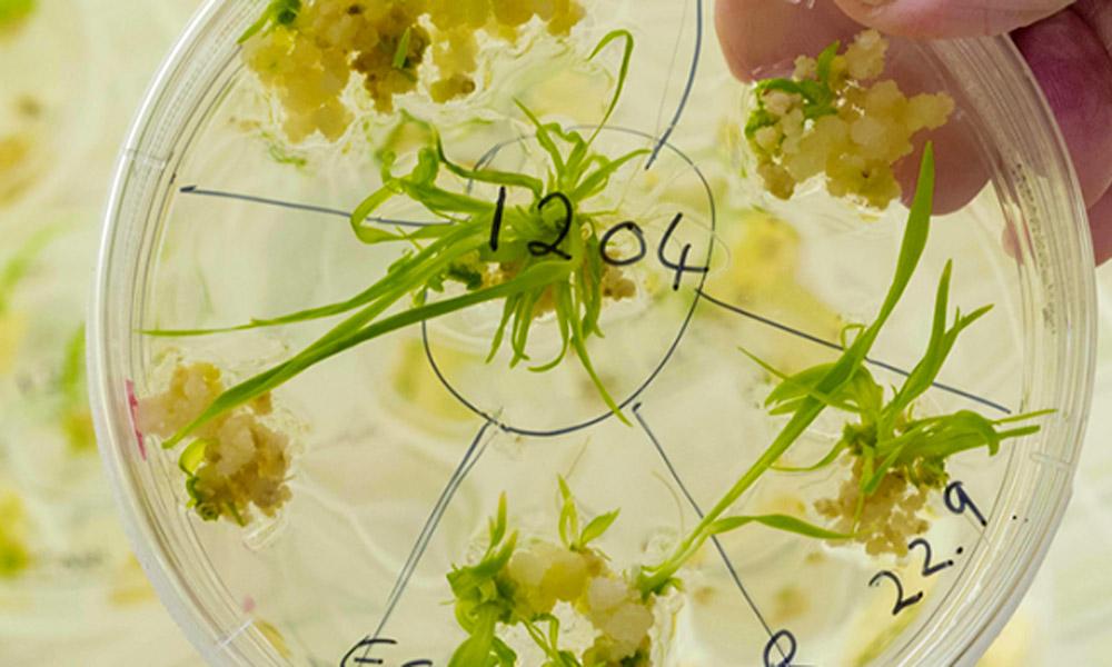 bitki-genetiginde-buyuk-donusume-az-kaldi1.jpg