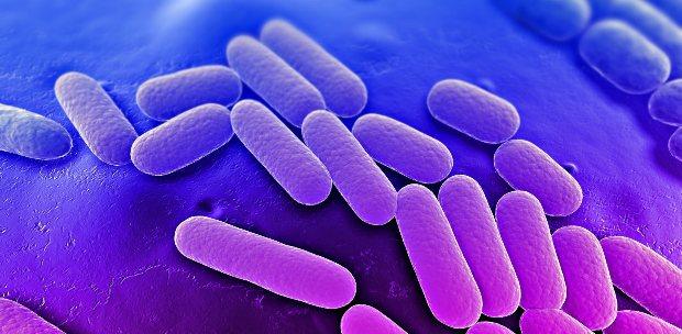 """Nasıl besleyebilir"""" başlıklı rapor yayınlandı. mikropların"""